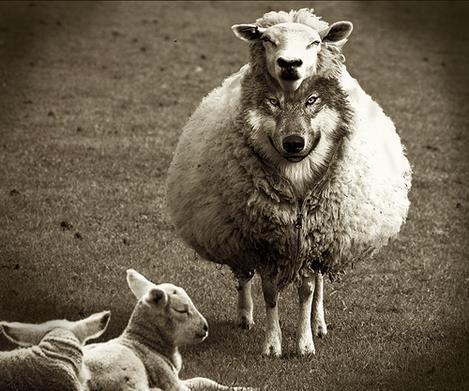 wolf-sheep1_000